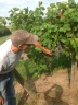 Scouting wine grapes at Crazy Legs Vineyard via crazylegsvineyard.com