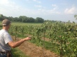 Minnesota vineyard via crazylegsvineyard.com