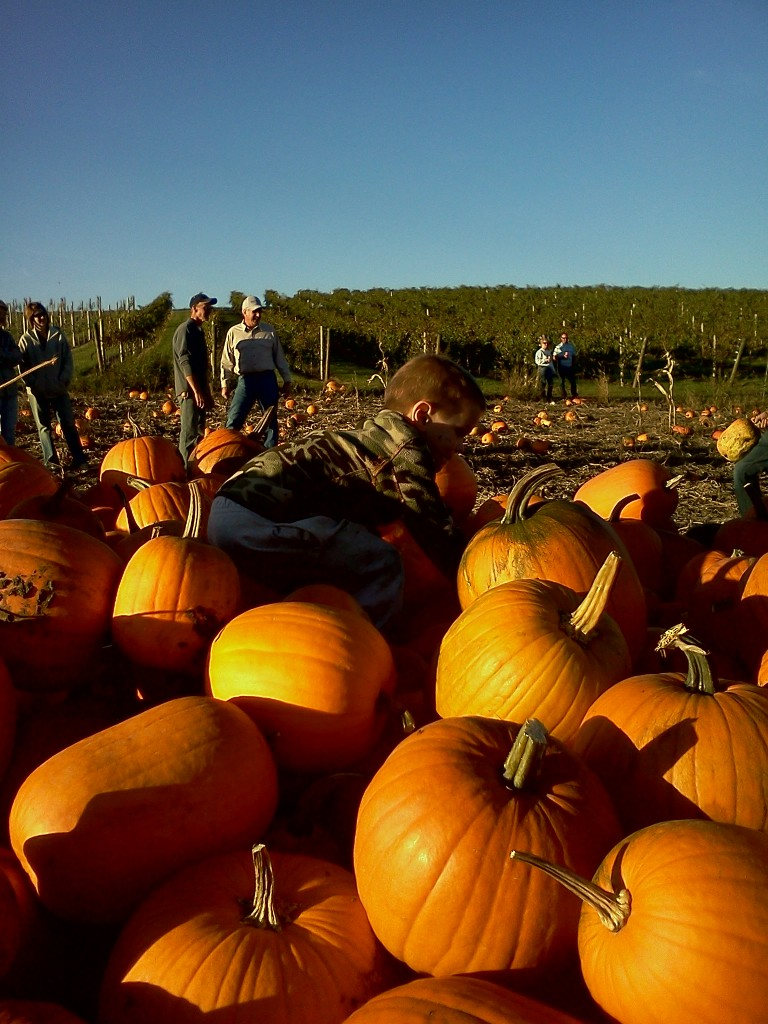 Picking pumpkins at Crazy Legs Vineyard crazylegsvineyard.com